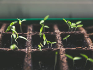 Planting Good Habits in Times of Crisis