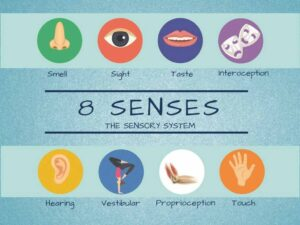 illustration that lists all eight senses